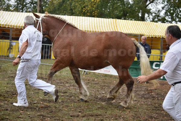 Concours Régional de chevaux de traits en 2017 - Trait COMTOIS - ELLIA DE FENEYROLS - 24