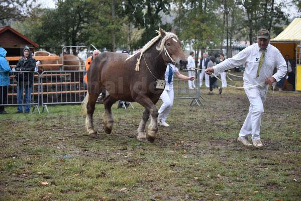 Concours Régional de chevaux de traits en 2017 - Pouliche Trait COMTOIS - ECLIPCE DE PIGASSOU - 12