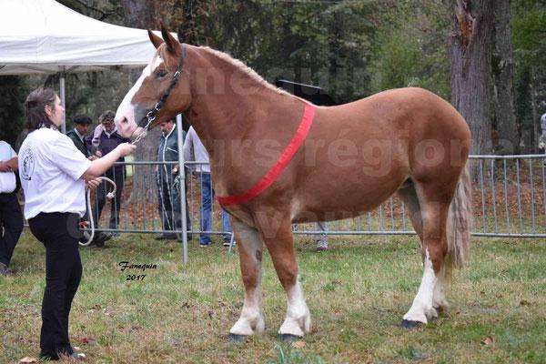 Concours Régional de chevaux de traits en 2017 - Trait BRETON - FEE DE MARLAC - 32