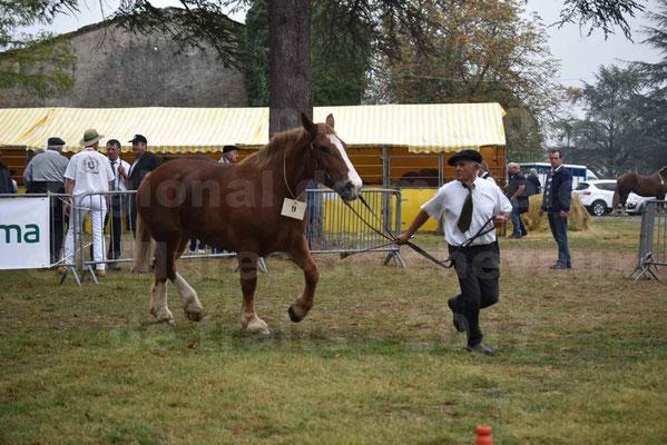Concours Régional de chevaux de traits en 2017 - Trait BRETON - FIBULE DU VERDUS - 16