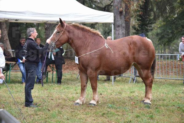 Concours Régional de chevaux de traits en 2017 - Pouliche Trait BRETON - EDEN DE LA GAUGE - 17