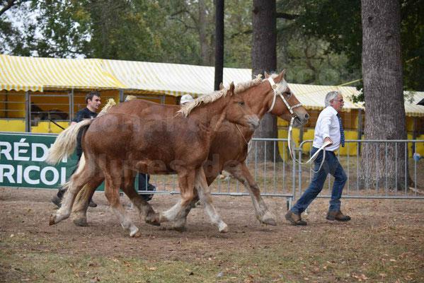 Concours Régional de chevaux de traits en 2017 - Trait COMTOIS - Jument suitée - ROXANE D'USSON - 18