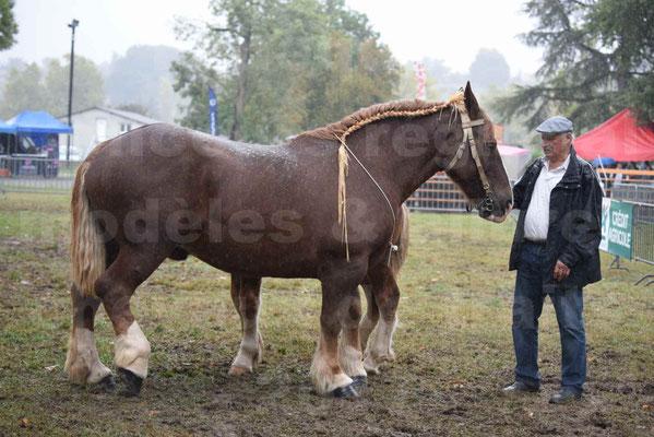 Concours Régional de chevaux de traits en 2017 - Trait BRETON - Jument suitée - SISIE DE LA GLEVADE - 01