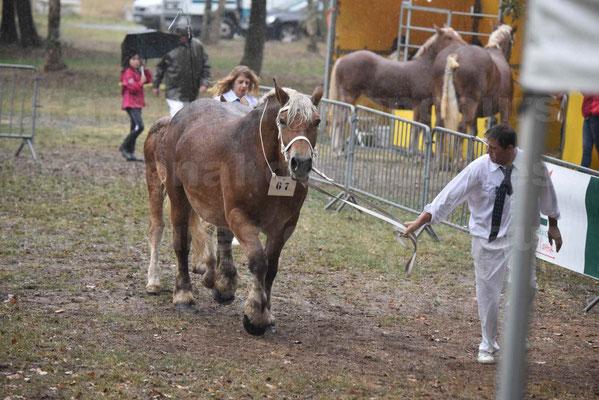 Concours Régional de chevaux de traits en 2017 - Trait COMTOIS - Jument suitée - RITA 38 - 14
