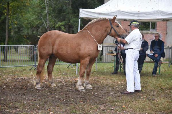 Concours Régional de chevaux de traits en 2017 - Trait COMTOIS  - EGLANTINE DE BENS - 07