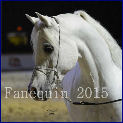 Cheval Passion 2015 - Portraits de chevaux ARABES