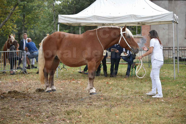 Concours Régional de chevaux de traits en 2017 - Jument & Poulain Trait COMTOIS - DAKOTA DU GARRIC - 09