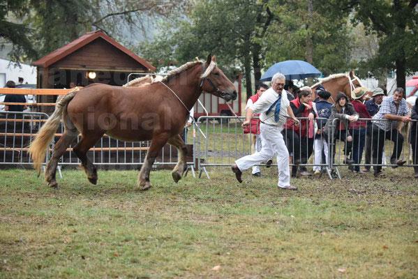 Concours Régional de chevaux de traits en 2017 - Pouliche Trait COMTOIS - DUCHESSE DE BENS - 04