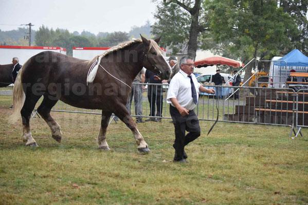 Concours Régional de chevaux de traits en 2017 - Trait BRETON - ELENNE DE TOU FOLL - 20