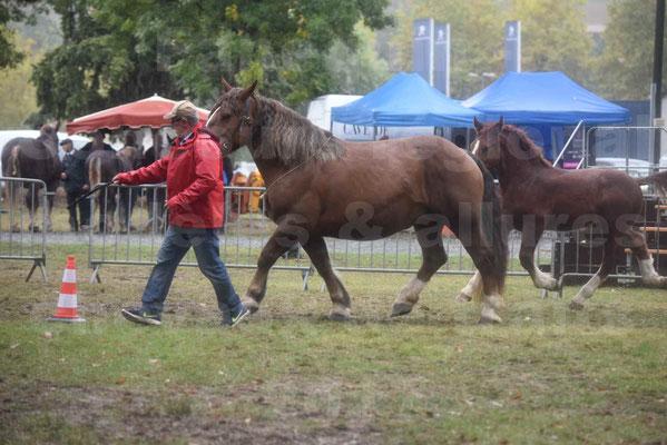 Concours Régional de chevaux de traits en 2017 - Jument Suitée - Trait BRETON - ULA DE BOUXOULIC - 04