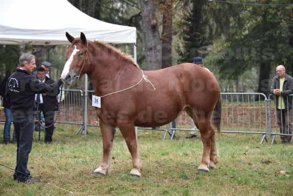 Concours Régional de chevaux de traits en 2017 - Pouliche Trait BRETON - EDEN DE LA GAUGE - 09