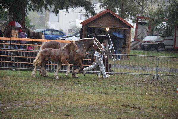 Concours Régional de chevaux de traits en 2017 - Trait COMTOIS - Jument suitée - RITA 38 - 03
