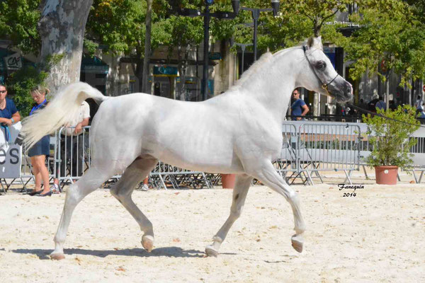 Concours national de Nîmes 2014 - ESTA ESPLANAN - Notre Sélection - 05