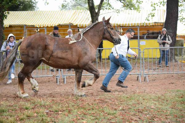 Concours Régional de chevaux de traits en 2017 - Trait BRETON - FINNE DE SAND - 06