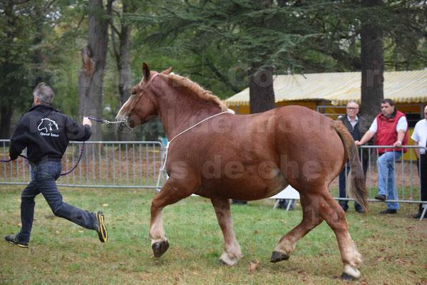 Concours Régional de chevaux de traits en 2017 - Pouliche Trait BRETON - EDEN DE LA GAUGE - 37
