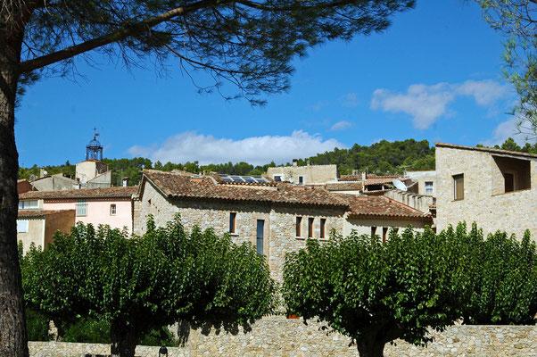 mûriers de Provence