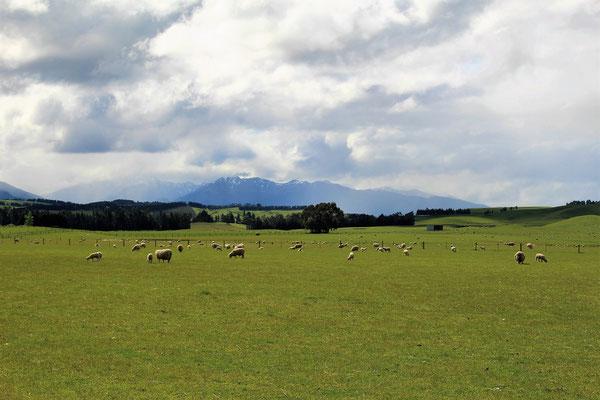 PAYSAGE ENTRE QUEENSTOWN ET TE ANAU ILE DU SUD NZ