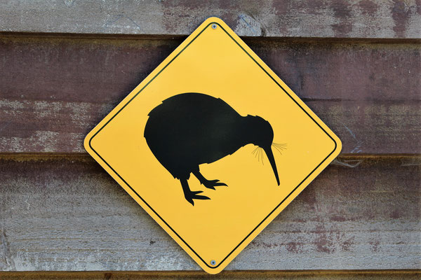 ATTENTION KIWI AU ZOO AUCKLAND NZ