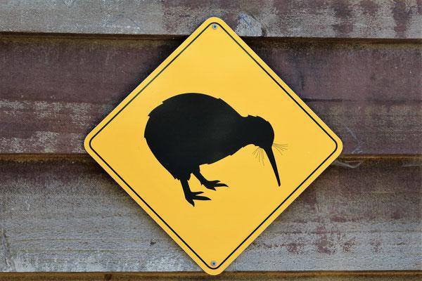 ATTENTION KIWI AU ZOO AUCKLAND NZ