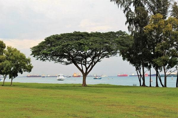 BATEAUX EN ATTENTE ET FRONT DE MER A MARINA SOUTH PIER A SINGAPOUR