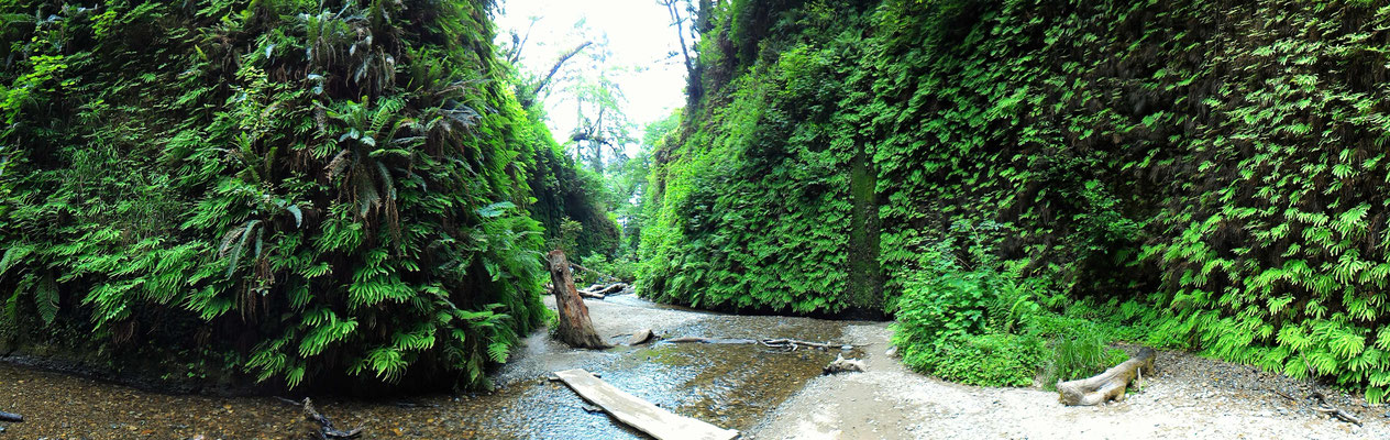 FERN CANYON DAY USE DANS LE REDWOOD STATE PARK EN CALIFORNIE