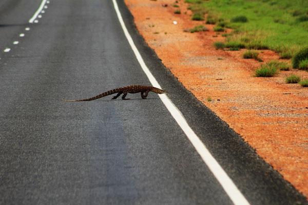 VARAN SUR LA STUART HIGHWAY AVANT ALICE SPRINGS CENTRE ROUGE AUSTRALIE