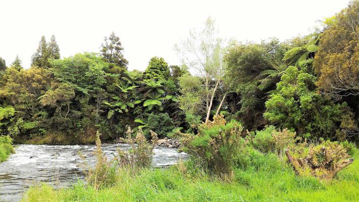 RANDO HANGATAHUA A OKATO ILE DU NORD NZ