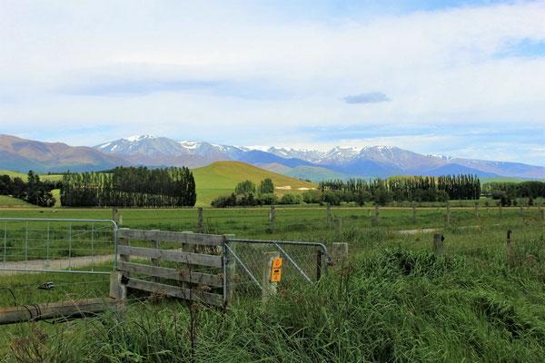 PAYSAGE ENTRE DUNTROON ET OTEMATATA ILE DU SUD NZ