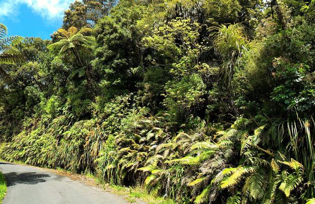 BORD DE ROUTE QUI MENE AU PLATEAU SUD DE TONGAPORUTU ILE DU NORD NZ