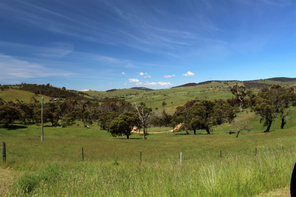 PAYSAGE ENTRE BIRTH ET BAIRNSDALE SUR LA GREAT ALPINE ROAD AUSTARLIE