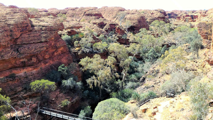LE CANYON JARDIN D'EDEN DE LA RANDO KINGS CANYON RIM WALK A KINGS CANYON NP CENTRE ROUGE AUSTRALIE
