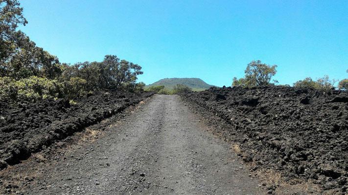 LE VOLCAN RANGITOTO DEPUIS LA SUMMIT ROAD RANGITOTO AUCKLAND ILE DU NORD NZ