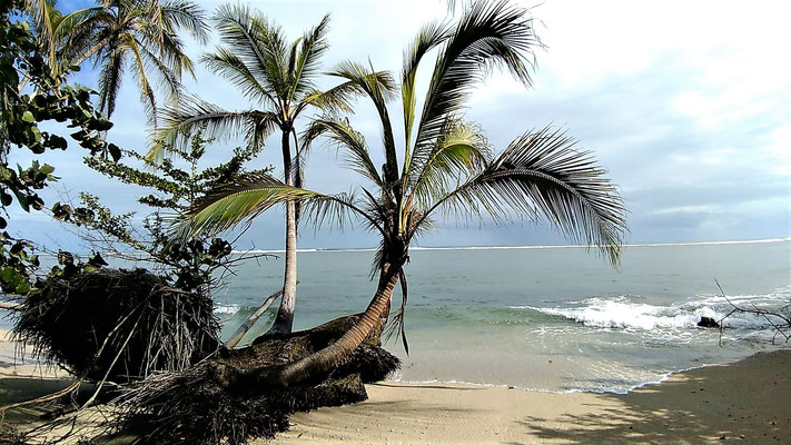 UNE DES PLAGE AU PARC NATIONAL DE CAHUITA COSTA RICA