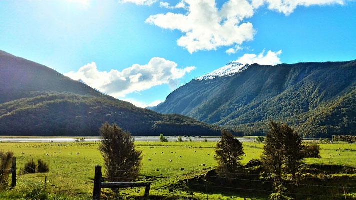 PAYSAGE ENTRE HAAST ET WANAKA ILE DU SUD NZ