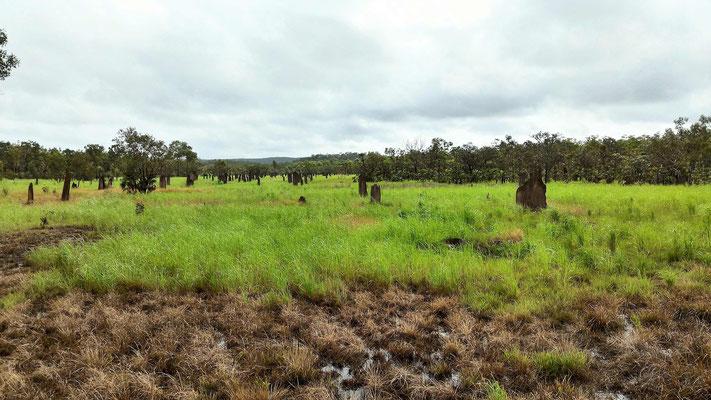 TERMITIERES MAGNETIQUE A TERMITE MOUNDS AU  LITCHFIELD NP SUD DE DARWIN AUSTRALIE