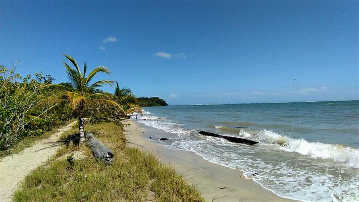 UNE PLAGE AU PARC NATIONAL DE CAHUITA COSTA RICA
