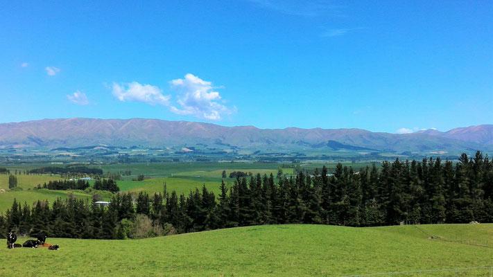 PAYSAGE ENTRE FAIRLIE ET GERALDINE ILE DU SUD NZ