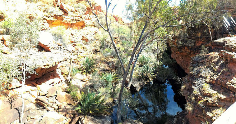 LE CANYON JARDIN D'EDEN DE LA RANDO RIM WALK A KINGS CANYON NP CENTRE ROUGE AUSTRALIE