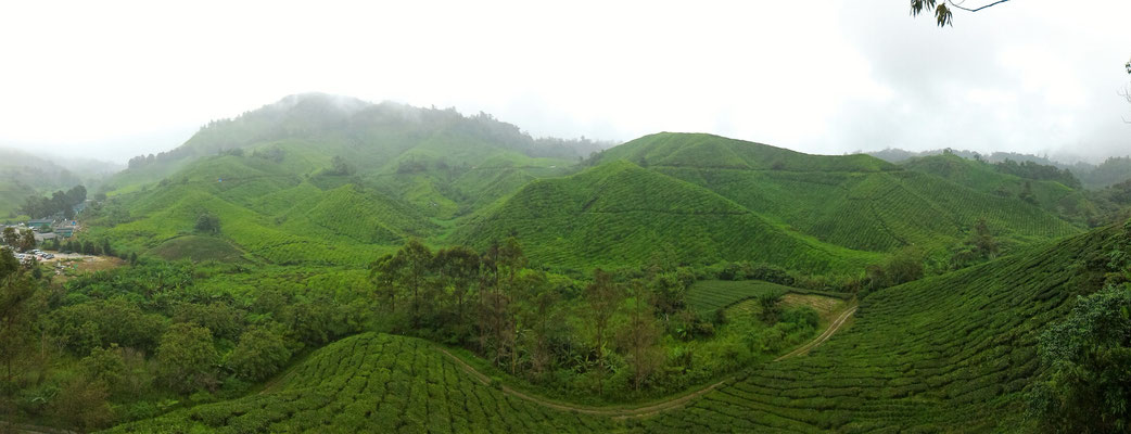 PANORAMIQUE PLANTATION BOH SUNGAI PALAS CAMERON HIGHLANDS MALAISIE