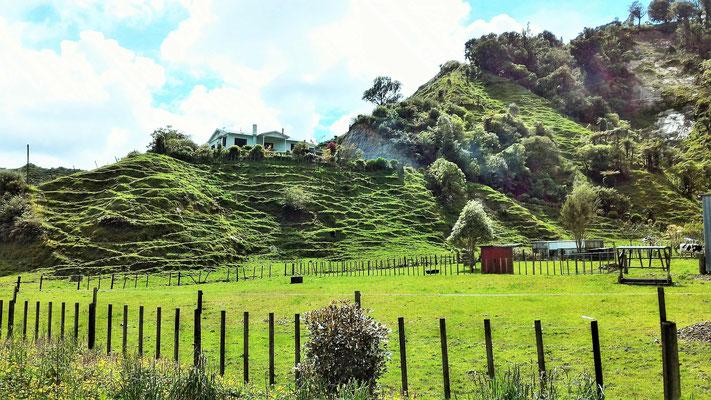SUR LA ROUTE ENTRE AHITITI ET TONGAPORUTU ILE DU NORD NZ
