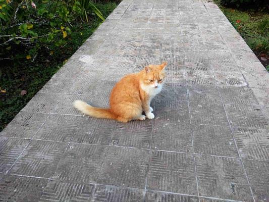 UN COUSIN A TIGROU A LA GUEST A CAHUITA COSTA RICA