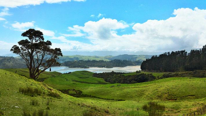 PENINSULE DE COROMANDEL COTE OUEST ILE NORD NZ