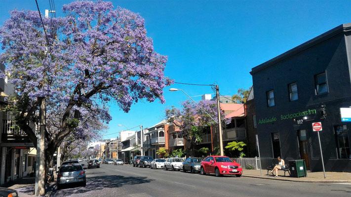 UNE RUE D'ADELAÏDE SOUTH AUSTRALIA AUSTRALIE