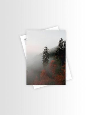 Schwarzwald Postkarte Tree