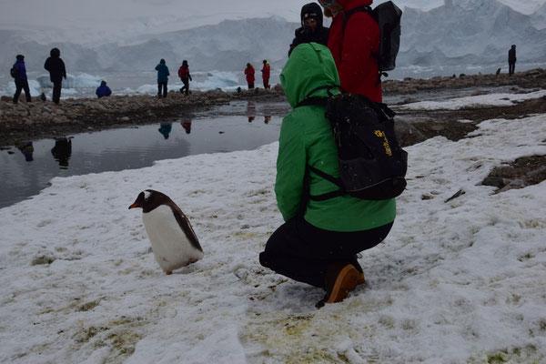 LindiBus Camper Vermietung Schweiz, Flawil, St.Gallen, Camperbus, Fernweh, Antarktis, Grün, Pinguin, Ocean wide Expetidition, Plancius,