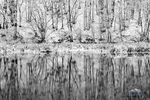 Winter black and white forest