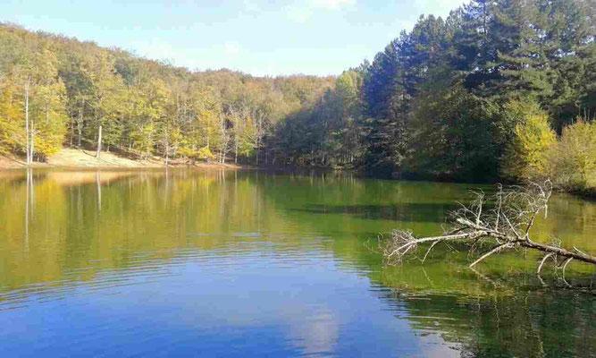 il laghetto della foresta