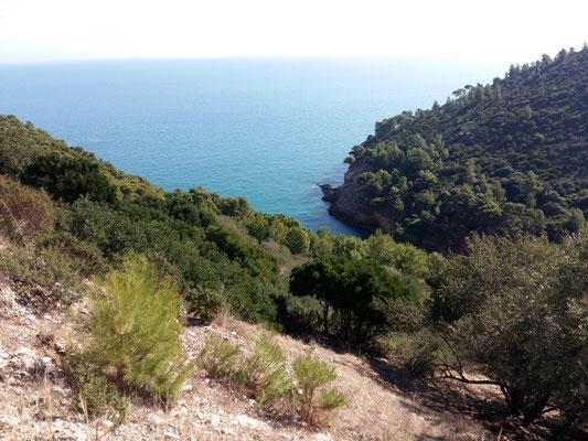 le pinete lungo la costa