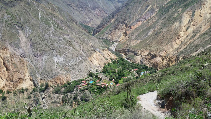 Die Oase Sangalle im Colca Canyon