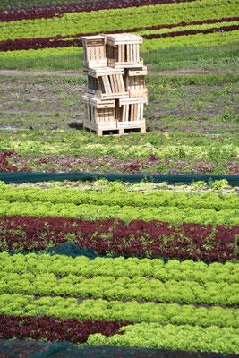 Geometrie des Gemüseanbaus.